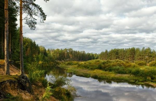 Река Медведица в тверской области
