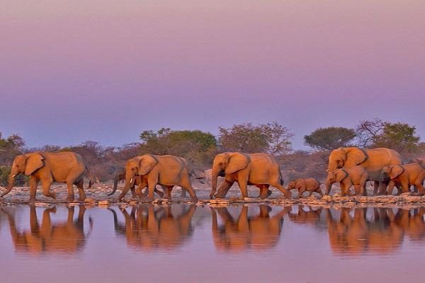 Слоны в Африке. Лимпопо