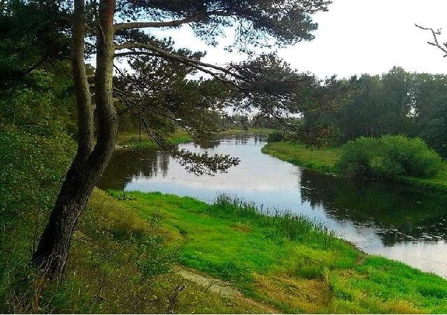 Река Руза летом