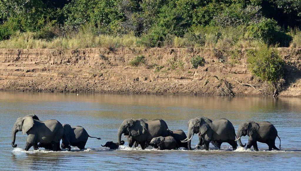 Река Луангва Замбия