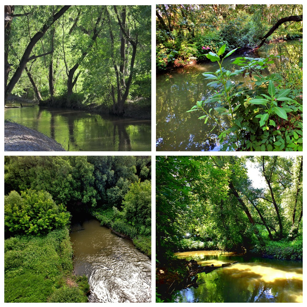 Лето река Сетунь